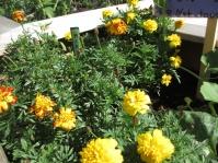 Garden IMG_1400