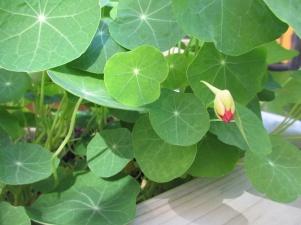 Garden IMG_1405