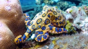 An Octopus is Amazing! Nonfiction student video from Class 3-102